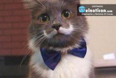Conoce al gato Hipster, se llama Hamilton y es un hit en las redes