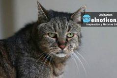 """""""Nutmeg"""" el gato más viejo del mundo ya tiene 31 años"""