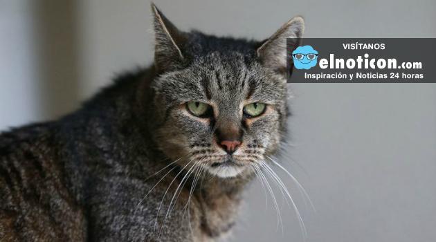 """""""Nutmeg"""" el gato más viejo del mundo ya tiene 31 anos"""
