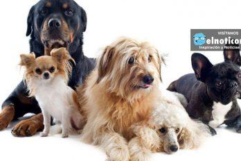 ¿Sabías que las mascotas también sufren del corazón? ¡OJO con estas alertas!