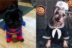 Las mascotas aman disfrazarse y estos 10 perritos son la prueba de ello