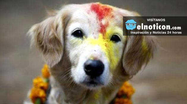 Nepal celebra la fiesta que les agradece a los perros su lealtad y amistad