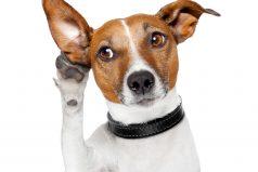 3 consejos para eliminar pulgas de tus mascotas naturalmente