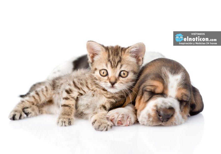 Científicos descubrieron qué sueñan los perros ¡increíble!