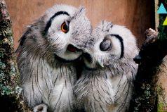 Los animales más fieles de la naturaleza ¡que bello es el amor!