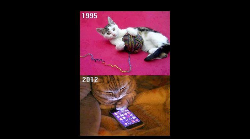 Gatos con celulares