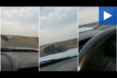 Típico, vas por la carretera y te estrella un hipopótamo, ¡qué susto!