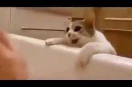 Este gatito nunca dejará que te 'ahogues' en la bañera. ¡Es todo un héroe!