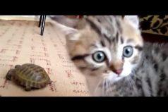 El valiente gatito que superó sus miedos para enfrentar a esta 'temible criatura'. ¡Qué bello!