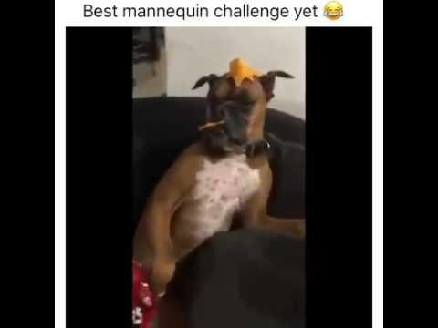 Perro-hace-el-mejor-mannequin-challenge