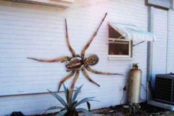 Las 10 arañas más grandes del mundo ¡Quedarás impresionado con su tamaño!