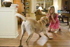 Las 6 mejores películas protagonizadas por animales, ¡nos encantan las mascotas!