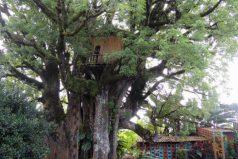 Así es la casa en el árbol más espectacular de mundo, construida con materiales reciclables y hasta tiene sótano