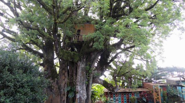 Así es la casa en el árbol más espectacular de mundo