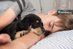 5 beneficios de dormir con tu perro, ¡es lo máximo!