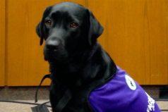 La perra que ayuda a chicos a declarar en la Justicia