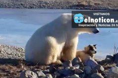 """La historia detrás del """"tierno"""" video viral de un oso y un perro"""