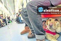Ya es ley: las mascotas podrán viajar en metro en Buenos Aires