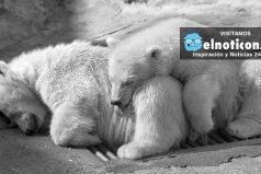 Si no hacemos algo para el año 2020, el 67% de los animales del planeta dejaran de existir