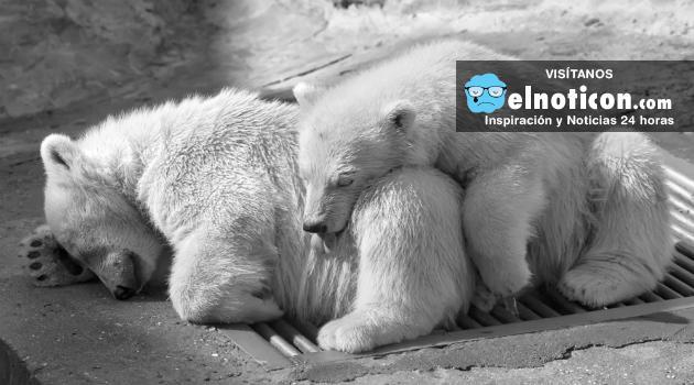 Si no hacemos algo para el 2020, el 67 de los animales del planeta dejaran de existir