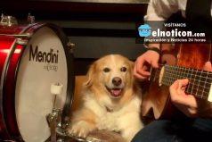 Cuando tu perro se convierte en el mejor compañero musical
