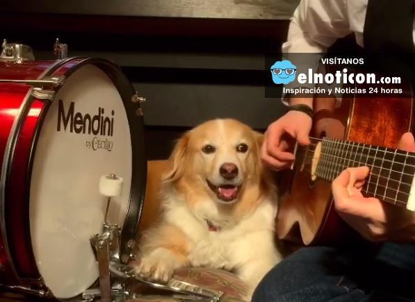 Cuando el perro es tu fiel compañero hasta en los gustos musicales
