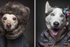 Estas fotos que muestran cómo se verían los perros si se vistieran como humanos