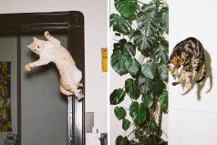 Gatos que fueron retratados justamente en la mitad de sus hábiles saltos