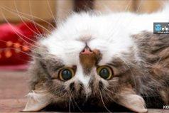 Científicos explicaron cómo los gatos nos alargan lavida