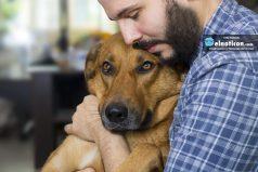 Estudio revela que los perros tienen memoria y se acuerdan lo que hacen sus dueños
