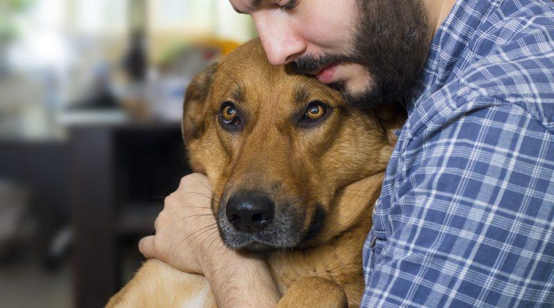 Los perros tienen memoria y se acuerdan lo que hacen sus dueños
