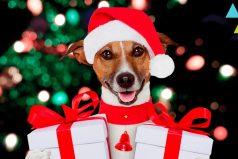 10 Regalos de navidad para tu perro, ¡son hermosos todos!