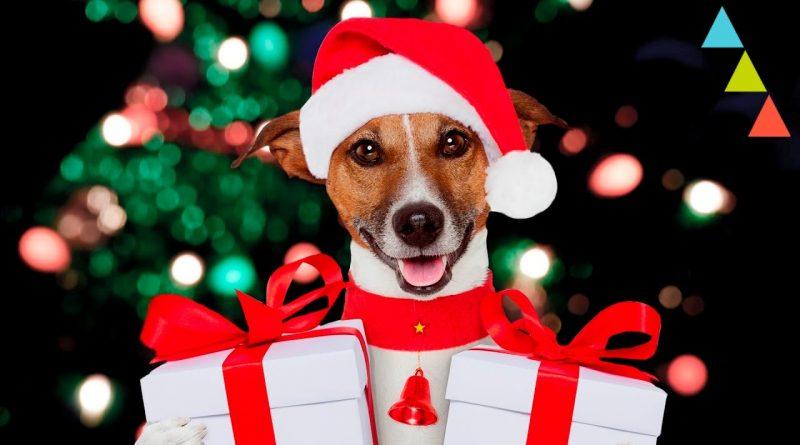 10-Regalos-de-Navidad-para-tu-perro-que-querrías-que-te-regalasen-a-ti
