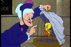 ¿Recuerdas a Piolin, Silvestre ya  la abuelita? 5 curiosidades ¡me pareció ver un lindo gatito!