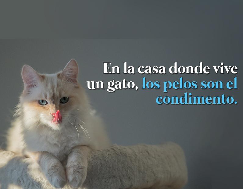 En la casa donde vive un gato los pelos son el condimento - El gato en casa ...