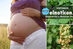 Hierbas medicinales ideales para embarazadas