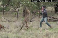 Un hombre boxea con un canguro para salvar a su perro