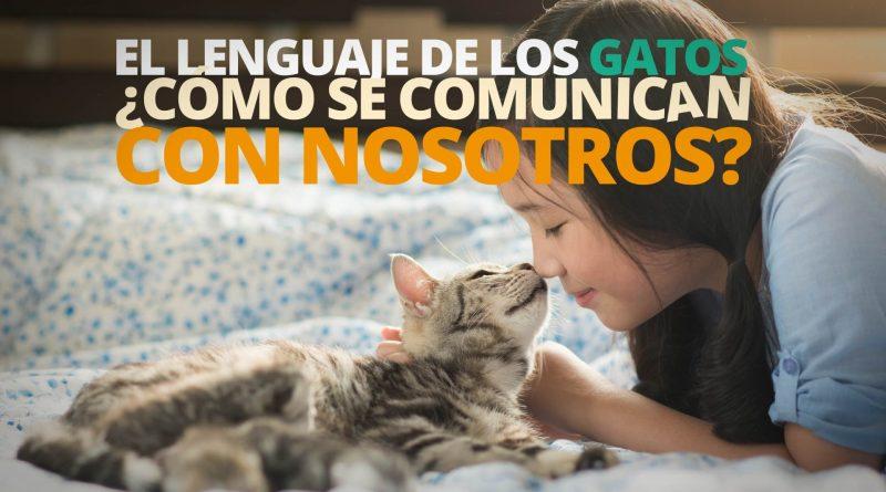 El-lenguaje-de-los-GATOS-¿Cómo-se-comunican-con-nosotros