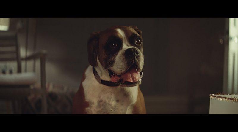 John-Lewis-Christmas-Advert-2016-BusterTheBoxer