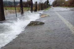 ¡Impresionante! Salmones cruzan una carretera inundada en el estado de Washington. ¡Típico en ellos buscar la ruta más difícil!