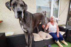 Él es Freddy, el perro más grande del mundo