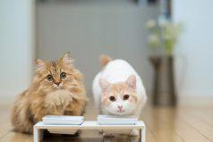 ¿Por qué los gatos solo comen el centro de su comida? Son divinos