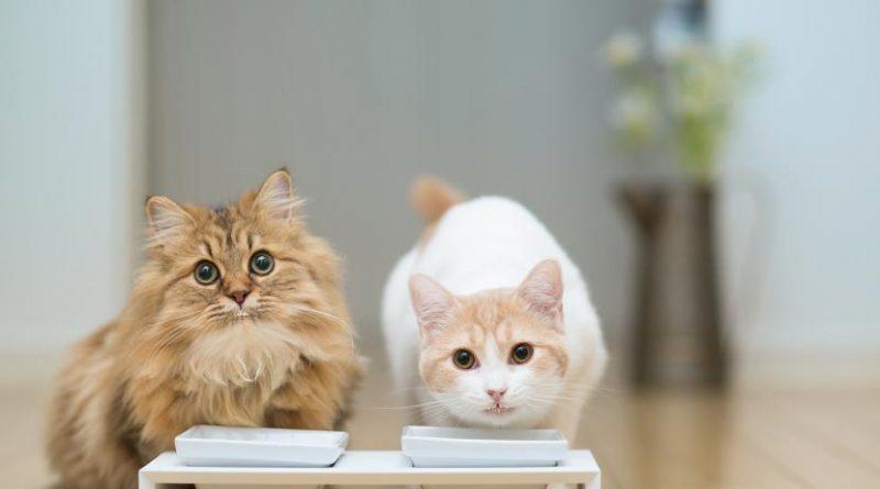 gatos_comiendo