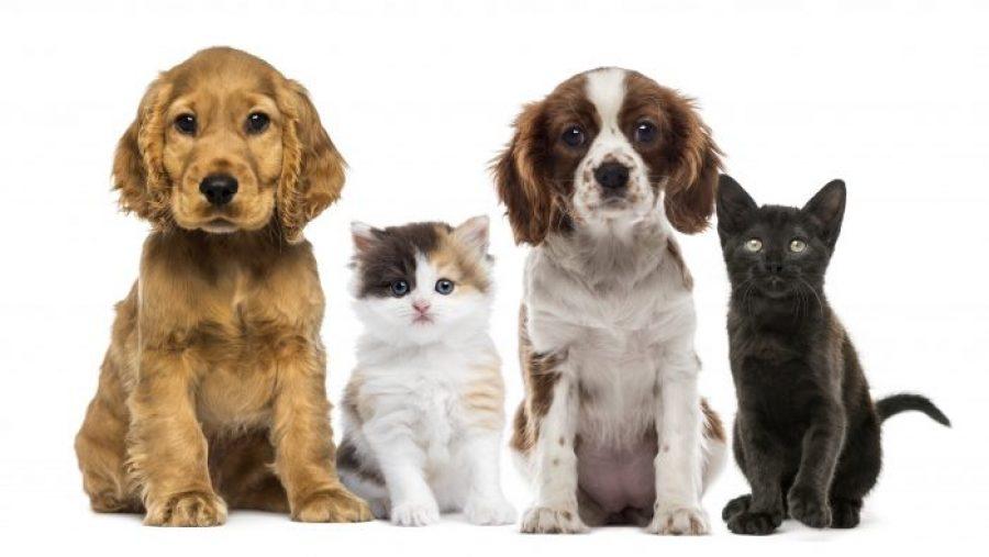 Los mejores tips para nuestras mascotas en esta época navideña; ¡nos encanta!