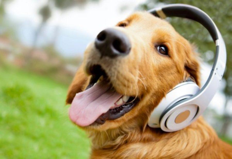 ¿Escuchas música en todo momento en todo lugar? 5 beneficios para tu salud