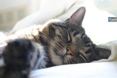 Este es el motivo por el que tu gato duerme encima de ti