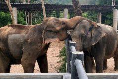 Esta elefanta traumatizada por los humanos no podía ni dormir. Hizo una nueva amiga y su vida cambió