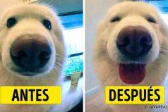 15Fotos que demuestran loimportante que esdecirles palabras decariño anuestras mascotas