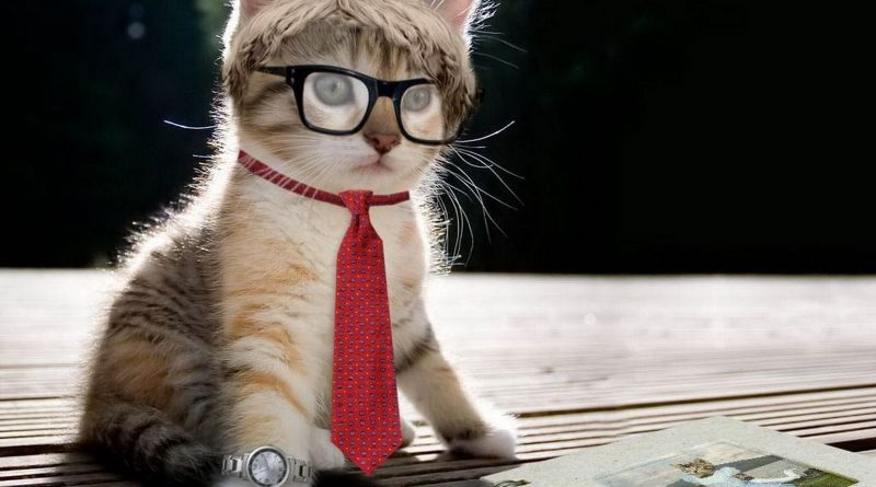 gatito empleado