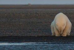 Así es como tristemente se ve la devastación del mundo a causa del cambio climático